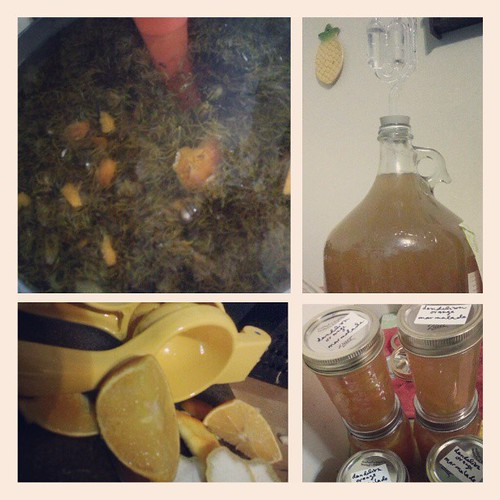 Simmer 20 min. Strain out dandelion. Add peel and juice of 4 oranges and 2.5 lb sugar. Cool. Add one tsp yeast nutrient and yeast. Put in fermenter. Use extra liquid to make dandelion orange marmalade.