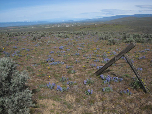 Wild Horse Wind Farm Wildflowers