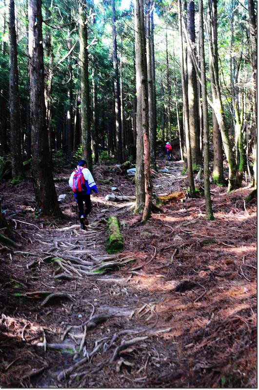 榛山森林浴步道