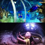 Sea life aquarium adventures by bartlewife