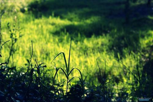 republica sol plantas jardin campo dominicana hd amina rd republicadominicana cad cesped finca valverde hierbas carlosduran haltadefinicion