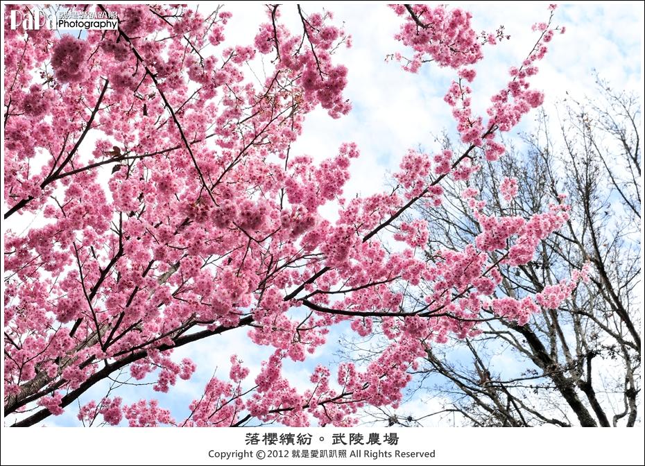 Wuling_0016