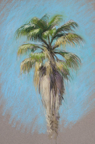 Washingtonia-palm by Spencer Mackay