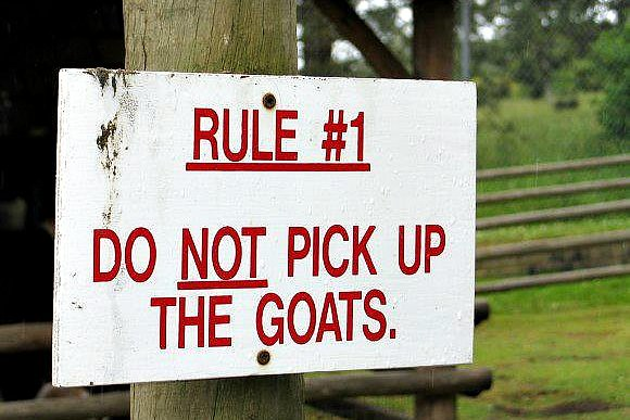 A sign says 'Rule #1: Don't pick up the goats'