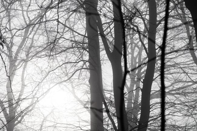 bokskogen