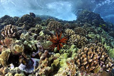 Best-snorkel-Molokini