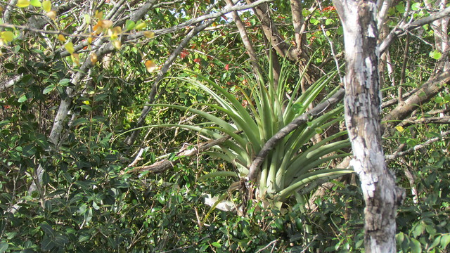 Header of Giant Airplant