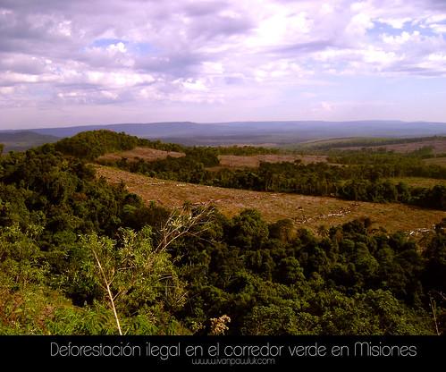 Deforestación ilegal en el corredor verde en Misiones by Ivan Pawluk