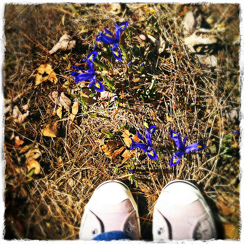 #fromwhereistand - first flowers!