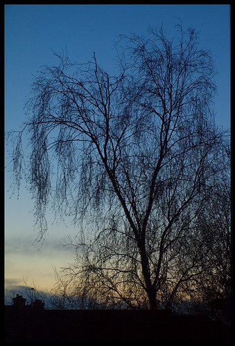 Spring Dawn with Tree