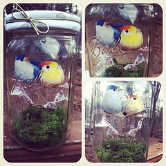 Lovebirds Diorama- a valentine gift for the girl's bff. #pinterest