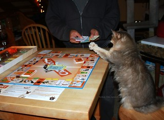Graciecakes tries her paw at a game of Catopoly