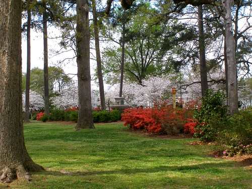 park trees sc grass landscape spring camden south blossoms lawn azalea blooms shrubs conifers cherrytrees 2012 publicpark hamptonpark mystuart