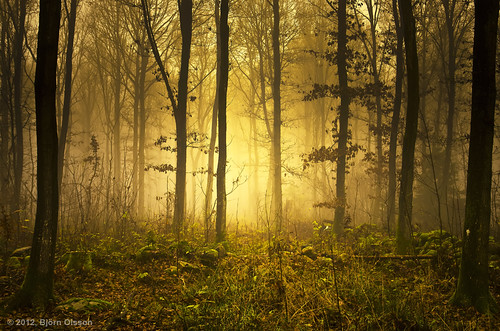 trees light landscape forrest sweden scandinavia
