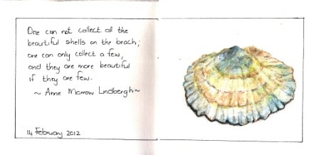 Sea Shell by Ansota