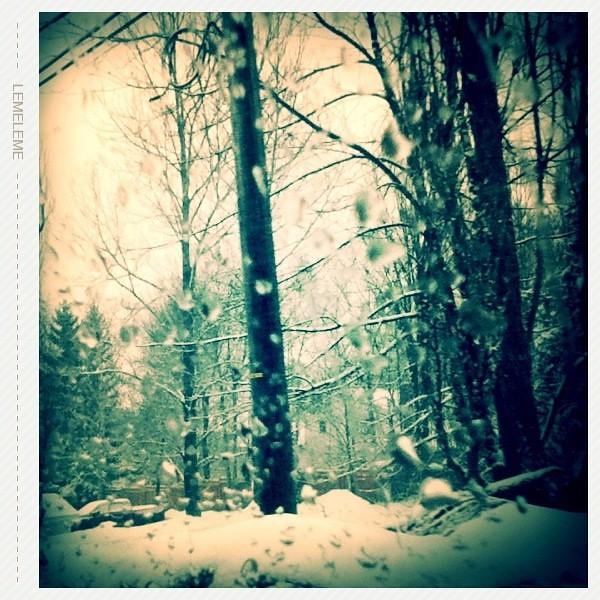 Bosque en la Ciudad