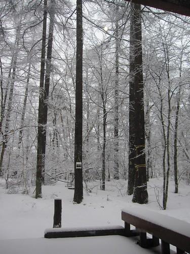 雨から雪になって・・・2012.3.31 by Poran111