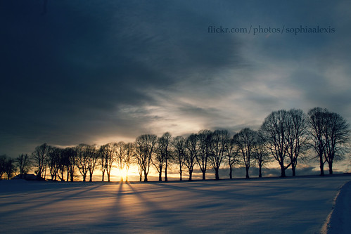 blue trees sunset snow yellow canon eos shadows sigma 7d 18200