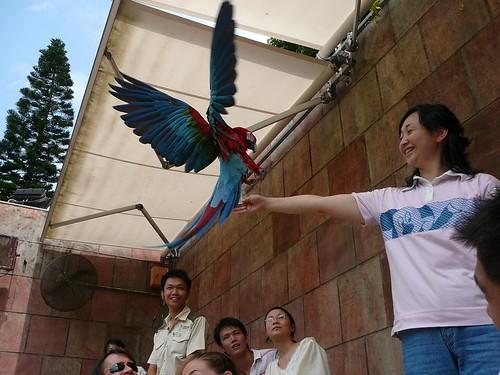 Macaw takes the cash - we met him earlier
