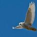 Snowy Owl by bowtoo