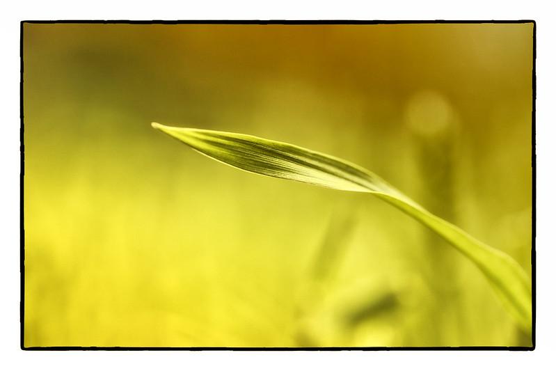 IMAGE: http://farm8.staticflickr.com/7046/6901587374_ec7306bf65_c.jpg
