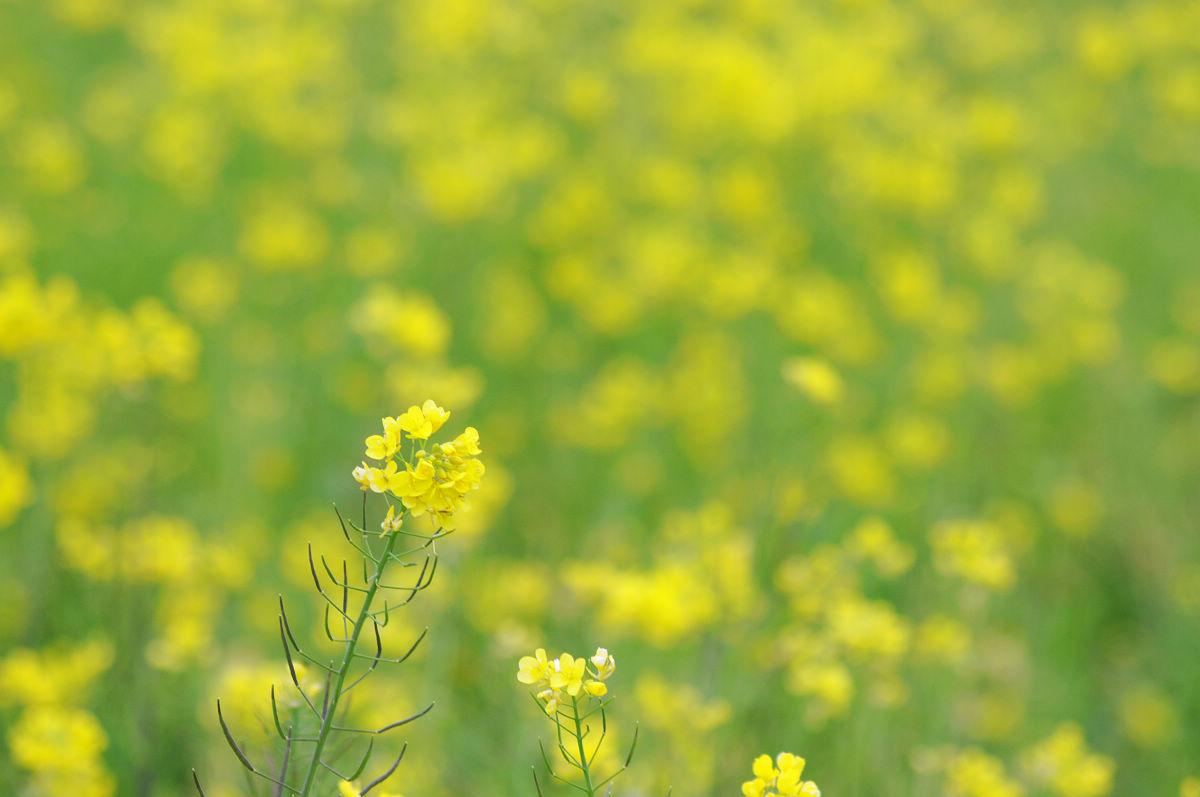 廢話有點多的2012武陵農場遊記