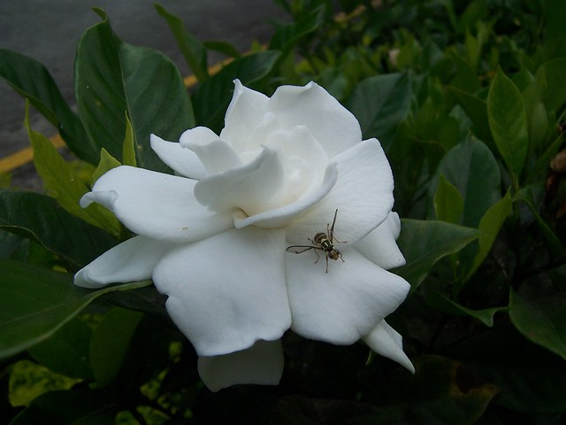 Sweet Smelling Flowers