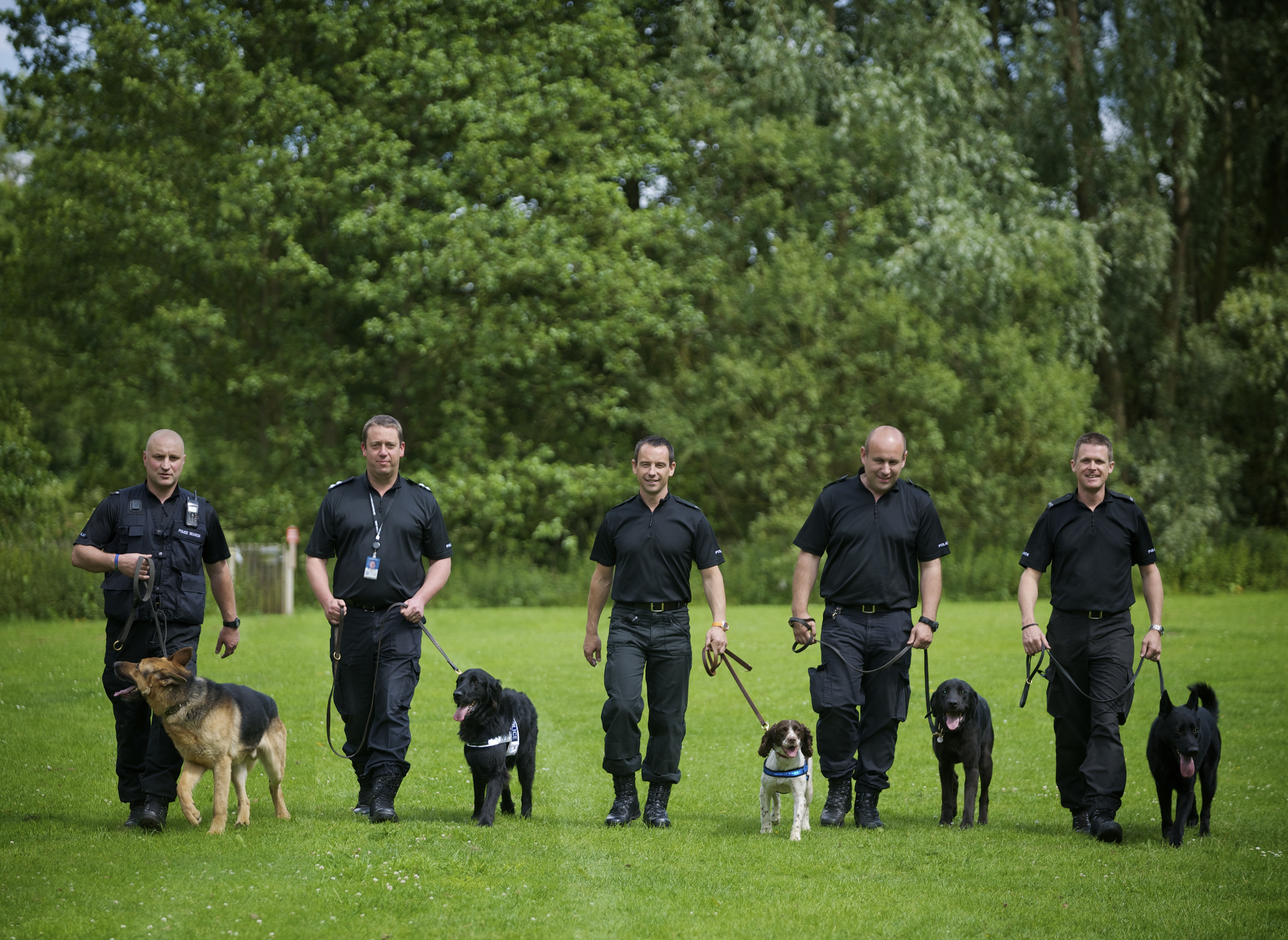 Image Result For Police Dog Training