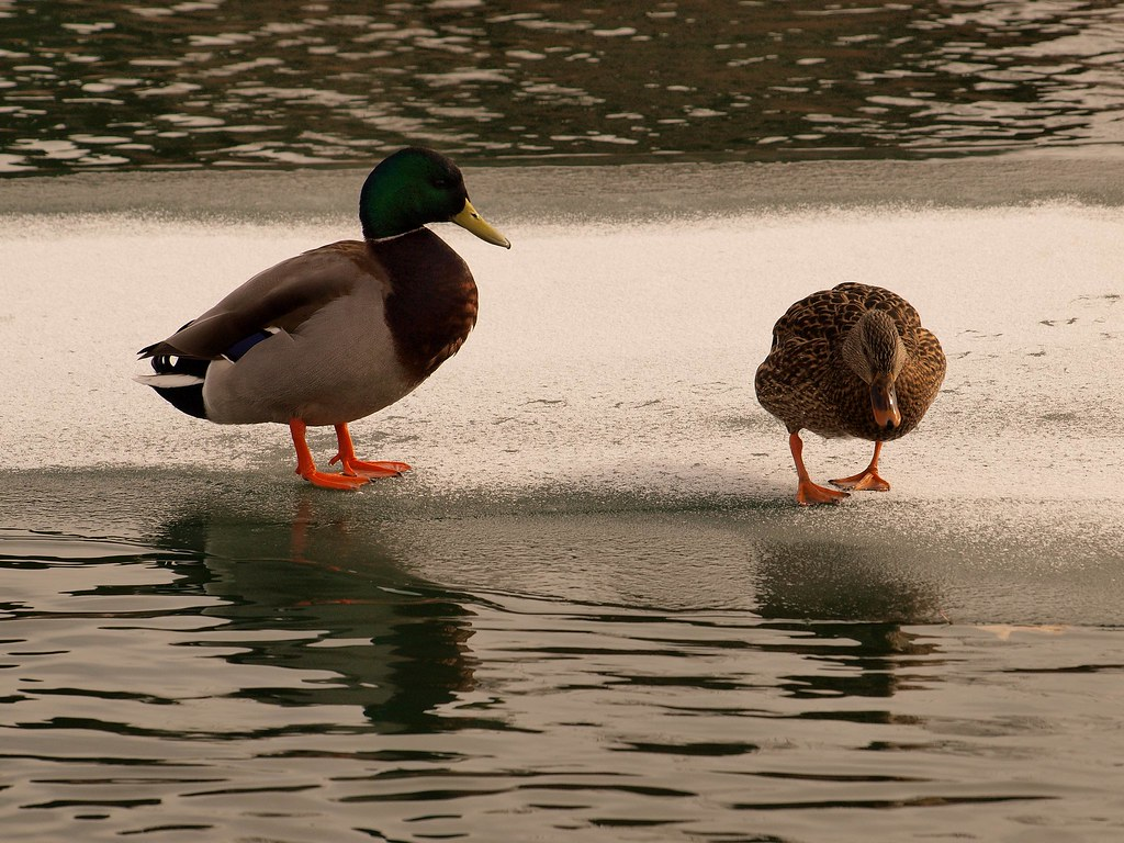 You Quack Me Up!