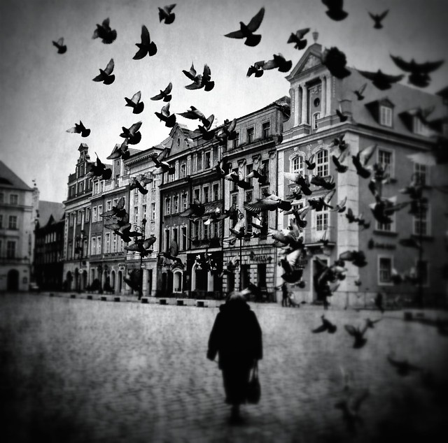 Pigeons on the old square market