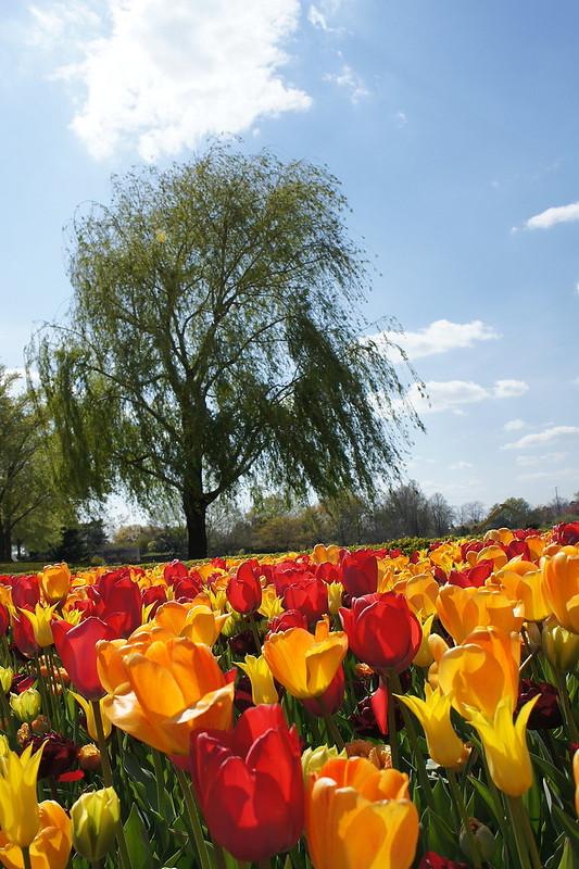 Crescent Garden @ Chicago Botanic Garden