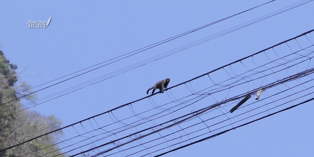 走鋼索的猴子
