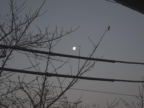 moon_2012-03-12