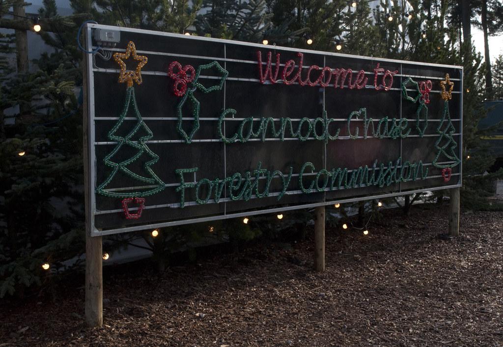 Cannock Chase Christmas Trees - Mhari Farmer's Most Interesting Flickr Photos Picssr