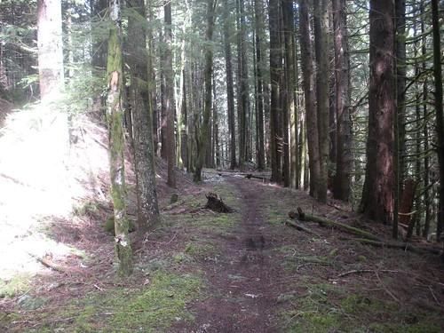 statepark usa washington unitedstates capitalforest mimaporter