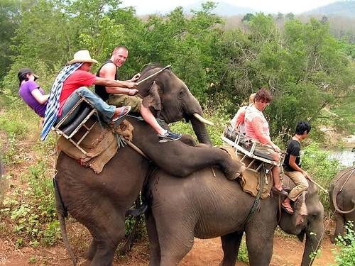 elefanti_thailandia