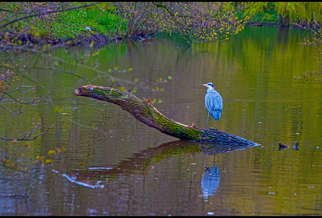 Unseen Reflection