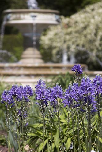 Blue Perennials by bahayla