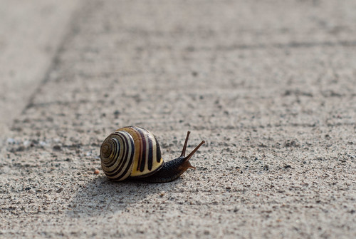 Spring city snail - #119/365 by PJMixer