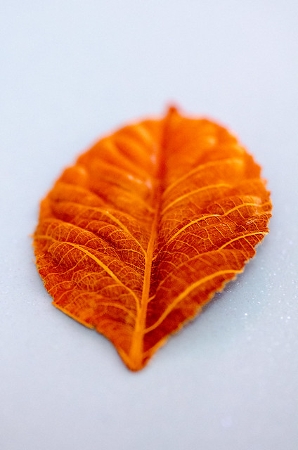 Orange paper autumn leaf