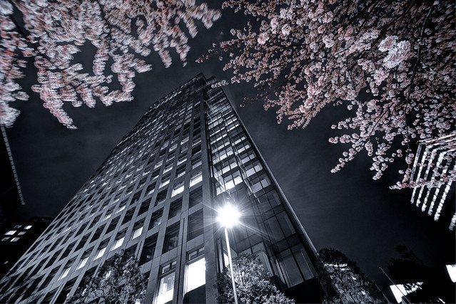 Sakura Heaven (桜天国へ続くビル)
