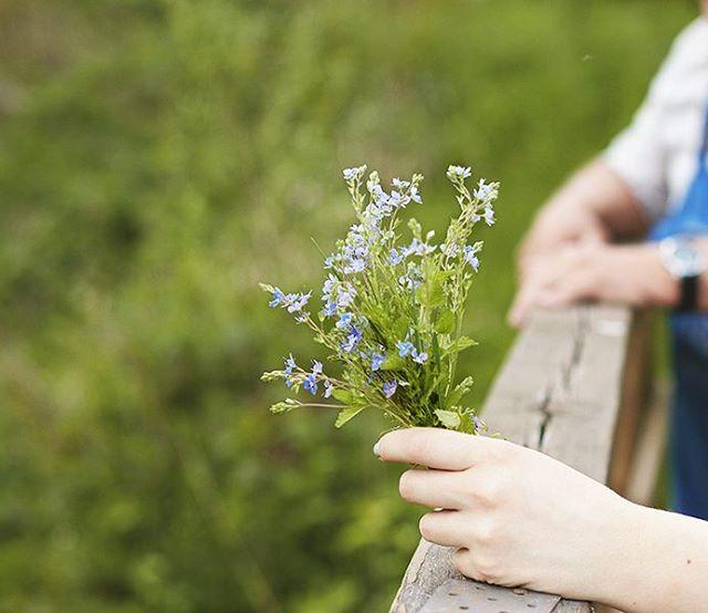 Niezapominajki ku pamięci #spacerzdziadkiem #zarzeczewo #niezapominajki #spacer #nalonienatury #natura #kwiaty #flowers #forgetmenot #forgetmenots