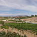 Temecula Wineries Panorama 5
