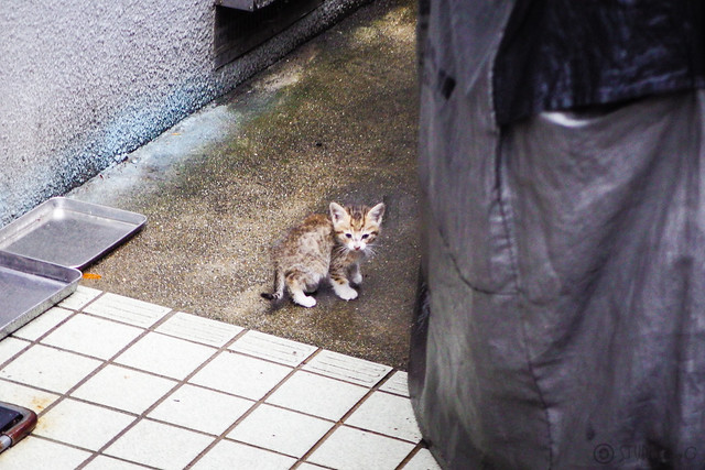 Today's Cat@2016-06-13