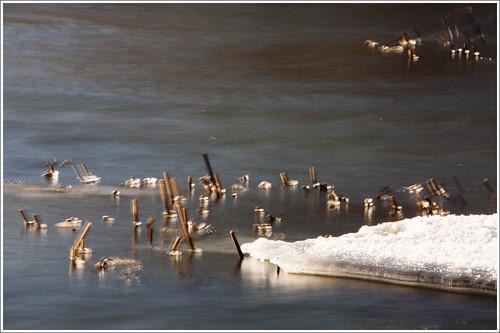 20120209. Kabala. Vigala river. 3324. by Tiina Gill