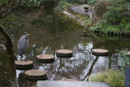 Heron Stepping Stones Close