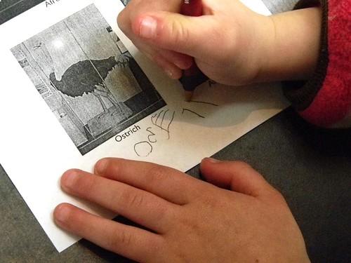 "Lucy writes ""ostrich"""