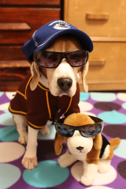 Swag Doggs