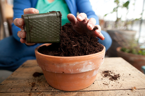 a soil mix - fill pots ALL the way