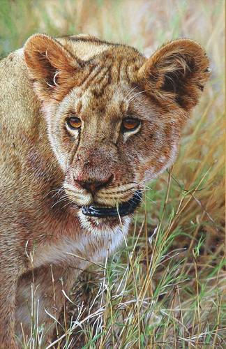 'Lioness' oil on board